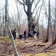 ブナの巨木調査